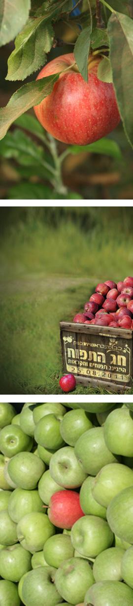 חג התפוח - ערכים תזונתיים
