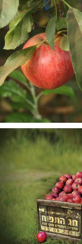 הפנינג תפוחים 2012 - בראשית
