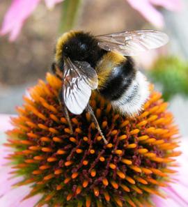 דבש הכל דבש - שילוב של בריאות ומתיקות