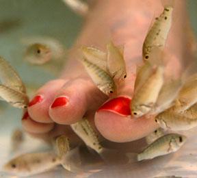 פדיקור דגים