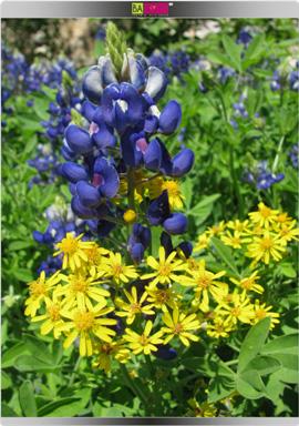 אביב הגיע, אלרגיה גם