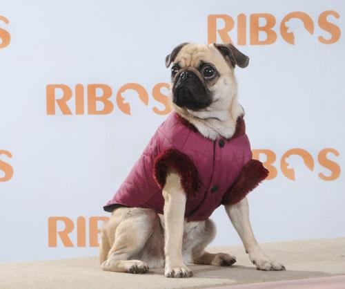 קולקציית סתיו-חורף 2012 לכלבים מבית ביו פט