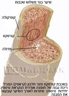יגאל ויצמן מציג: מוצר טיפוח מתקן שיער