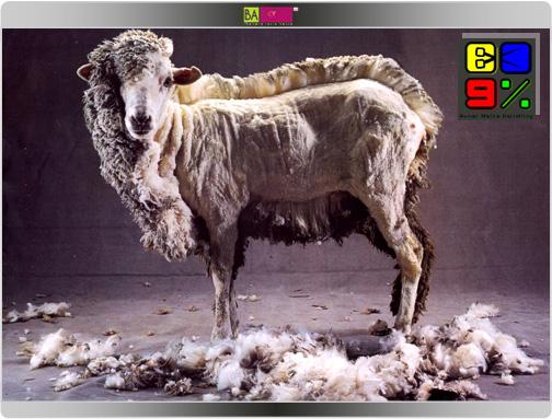 איפה הכבשה?