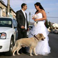 קרן בניסטי, נישאה בתחילת השבוע שעבר לבחיר ליבה יניב מלול